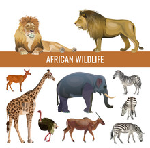 African Wildlife, Vector Image In Realistic Style