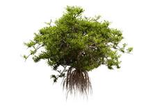 3D Rendering Mangrove Tree On ...