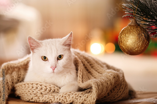 Obraz Cute white cat with scarf in room decorated for Christmas. Adorable pet - fototapety do salonu