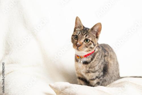 Photo かわいい猫