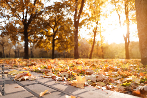 Arbre Beautiful leaves on ground in park. Autumn season