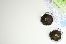 Petri Dishes With Soil And Spr...