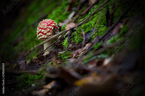 Photo  Red toadstool in autumn forest