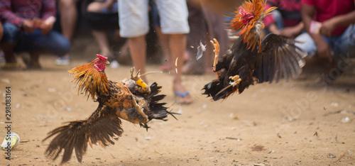 Canvastavla Combat de coqs