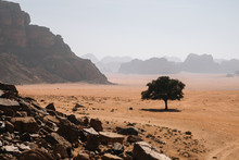 Lonely Tree Growing On Sandy S...