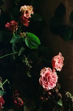 Pink Roses On Dark Background