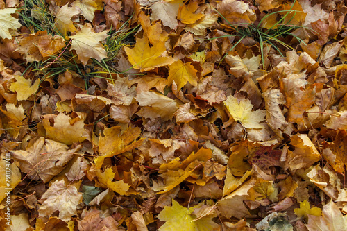 Photo The ground completely covered with various dead leaves as a background