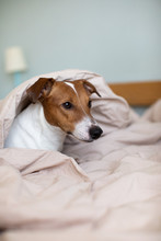 A Dog Waking Up In Bed