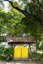 Caribbean Jungle