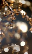 Dewdrop On Dried Plant