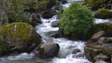 Rain Forest Stream Panama High...