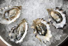 Close Up Of Oyster In Ice Bowl