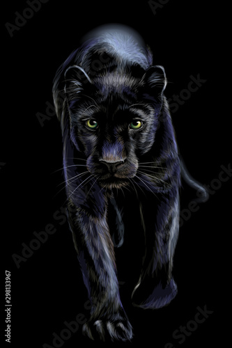 Canvas Prints Panther Panther. Artistic, sketchy, color portrait of a walking panther on a black background.