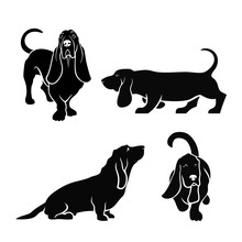 Basset Hound Dog Set Of Isolated Vector Illustrations