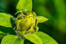 Morgentau Spinnennetze Blumen