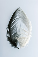 Yin & Yang Feathers