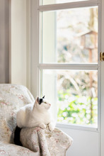 Black And White Cat Enjoying G...