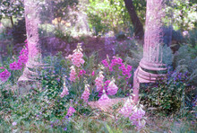 Pink Flowers And Columns