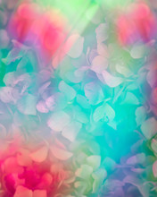 Rainbow Screen All Over Hortensia Flowers Pattern