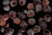 Classy Pinkish Flowers On Dark