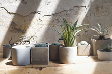 Succulents In Concrete Pots