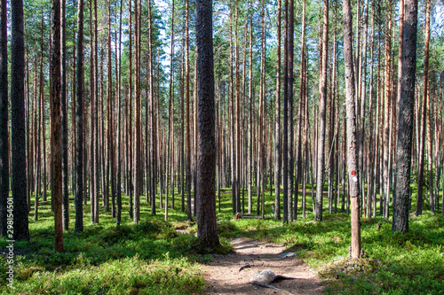 Foto op Aluminium Weg in bos Forest of the Pyha-Hakki national park, Finland