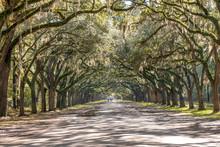 Treelined Road With Spanish Mo...