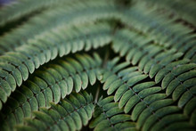 Abstract Green Fern  Backggrou...