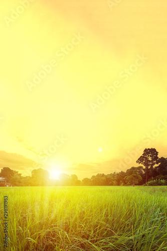 Foto auf Leinwand Gelb Schwefelsäure Paddy field and beautiful sunset/sunrise with sun rays. Nakorn Nayok, Thailand