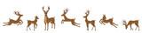 Fototapeta Fototapety na ścianę do pokoju dziecięcego - Set of Deers Isolated. Sika Deers, Reindeers, Stags