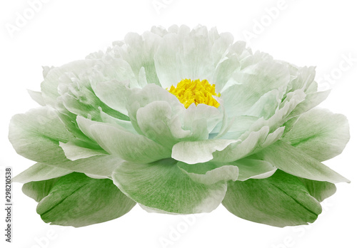 light green  Peony flower on a white isolated background with clipping path. Nature. Closeup no shadows. Garden flower. - 298210538