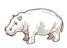 African Hippo Or Hippopotamus ...