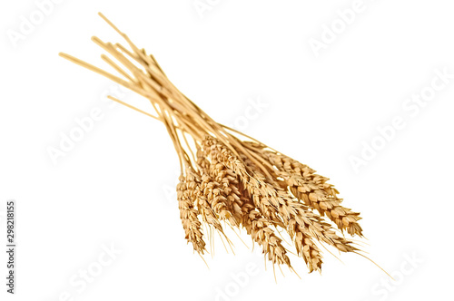 Obraz One beautiful bunch of ripe wheat with many grain for production flour and baking products isolated on white background without shadow. Close-up - fototapety do salonu