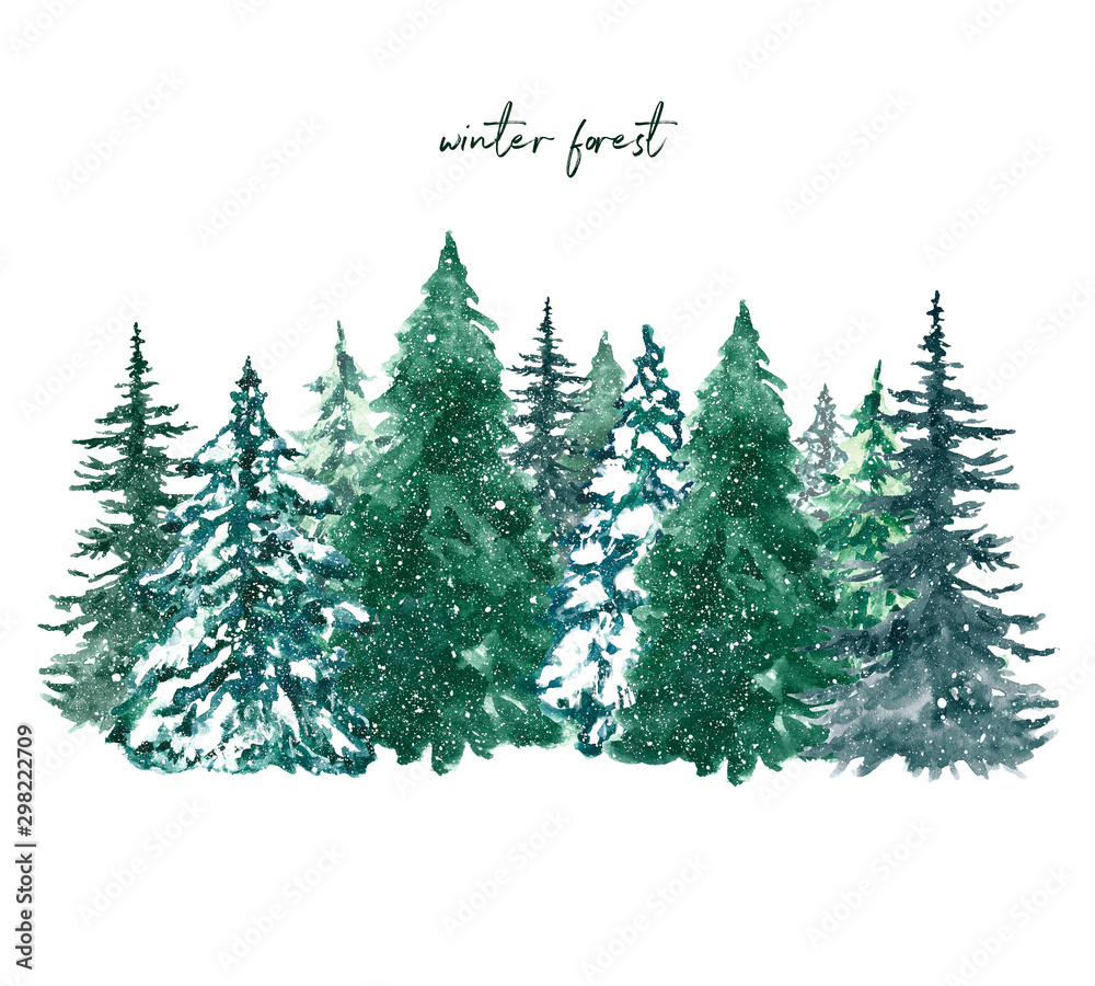 Watercolor winter pine tree forest illustration. Hand painted conifer spruce trees with falling snow, isolated on white background. Christmas themed design.