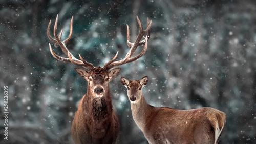 Fototapeta Noble deer family in winter snow forest. Artistic winter christmas landscape. Winter wonderland. obraz