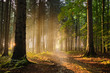 canvas print picture - Sonnenschein am Waldweg