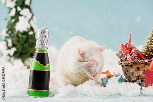rat, bottle and wicker sled with christmas tree and gift boxes in New Year