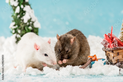 cute rats and wicker sled with gift boxes in New Year