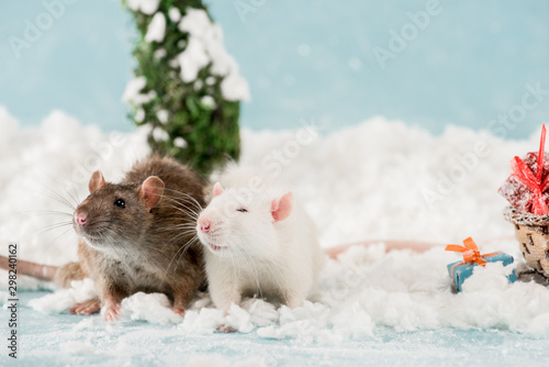 cute rats and christmas gift boxes on snow in New Year