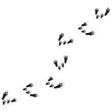 Illustration With Rat Tracks. ...