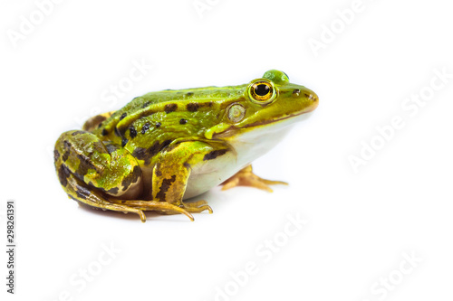Photo Male green Frog on white