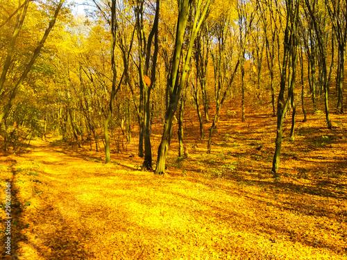 Cadres-photo bureau Miel Autumn sunny landscape. Beautiful autumn trees leaves in the park.