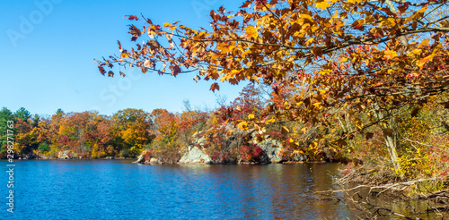Photo Maple tree with golden leaves framing a boulder by a lake