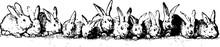Twelve Rabbits Vintage Illustration.