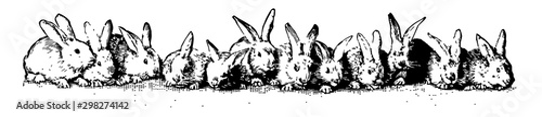 Fotografia Twelve Rabbits vintage illustration.