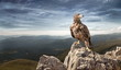 an eagle sits on a stone in the mountains