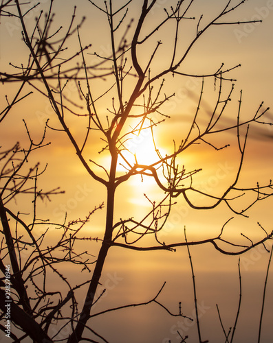 Foto auf Gartenposter Individuell Leafless tree branches at dawn of the sun
