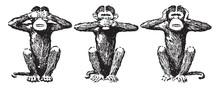 Three Wise Monkeys, Vintage Il...