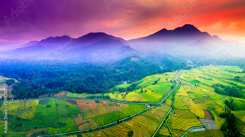Garden Poster Rice fields beauty green and yellow rice fields, river indonesia with beauty place bengkulu on mountain range sumatera indonesia