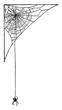 Spider Web, vintage illustration.